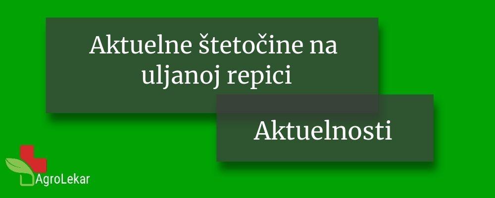 Read more about the article AKTUELNE ŠTETOČINE NA ULJANOJ REPICI
