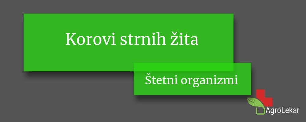 Read more about the article Korovi strnih žita – suzbijanje