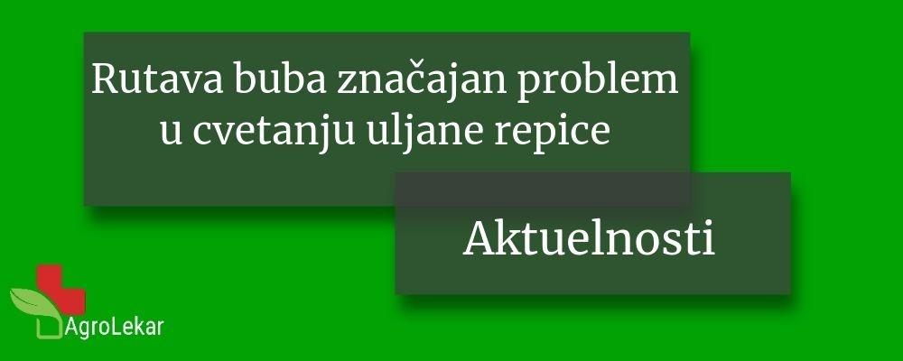 Read more about the article RUTAVA BUBA ZNAČAJAN PROBLEM U CVETANJU ULJANE REPICE