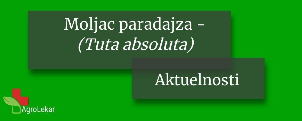 Read more about the article OPASNA ŠTETOČINA PARADAJZA – Moljac paradajza (Tuta absoluta)