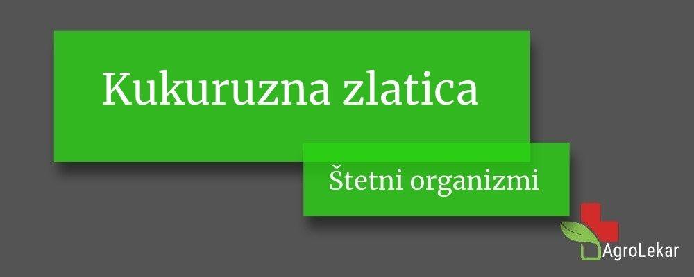 Read more about the article Kukuruzna zlatica