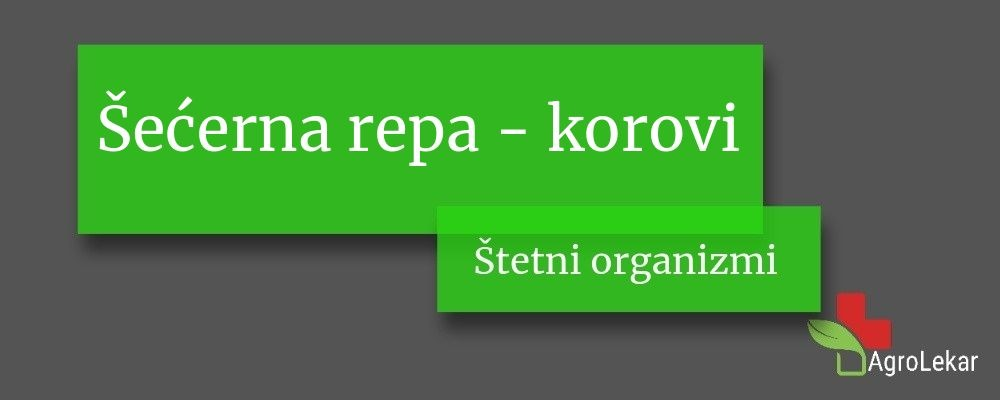 Read more about the article Šećerna repa – KOROVI