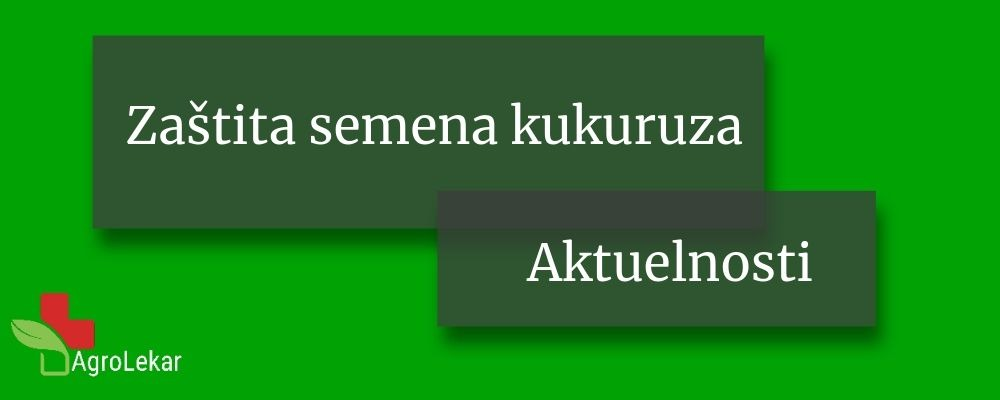 Read more about the article ZAŠTITA SEMENA KUKURUZA