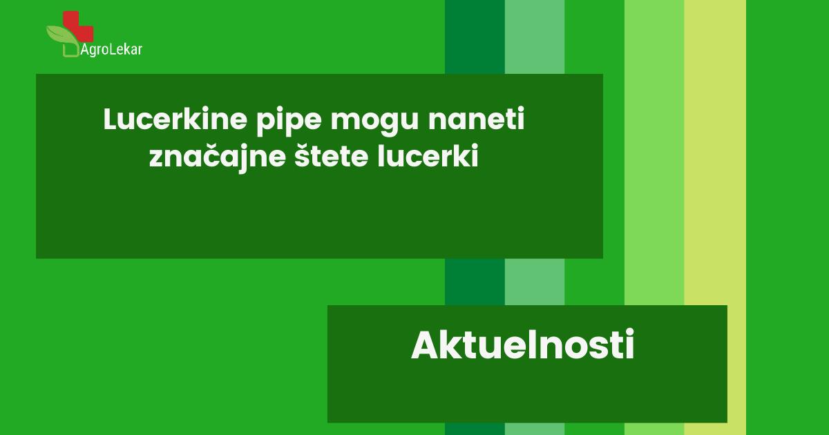 Read more about the article LUCERKINE PIPE MOGU NANETI ZNAČAJNE ŠTETE LUCERKI