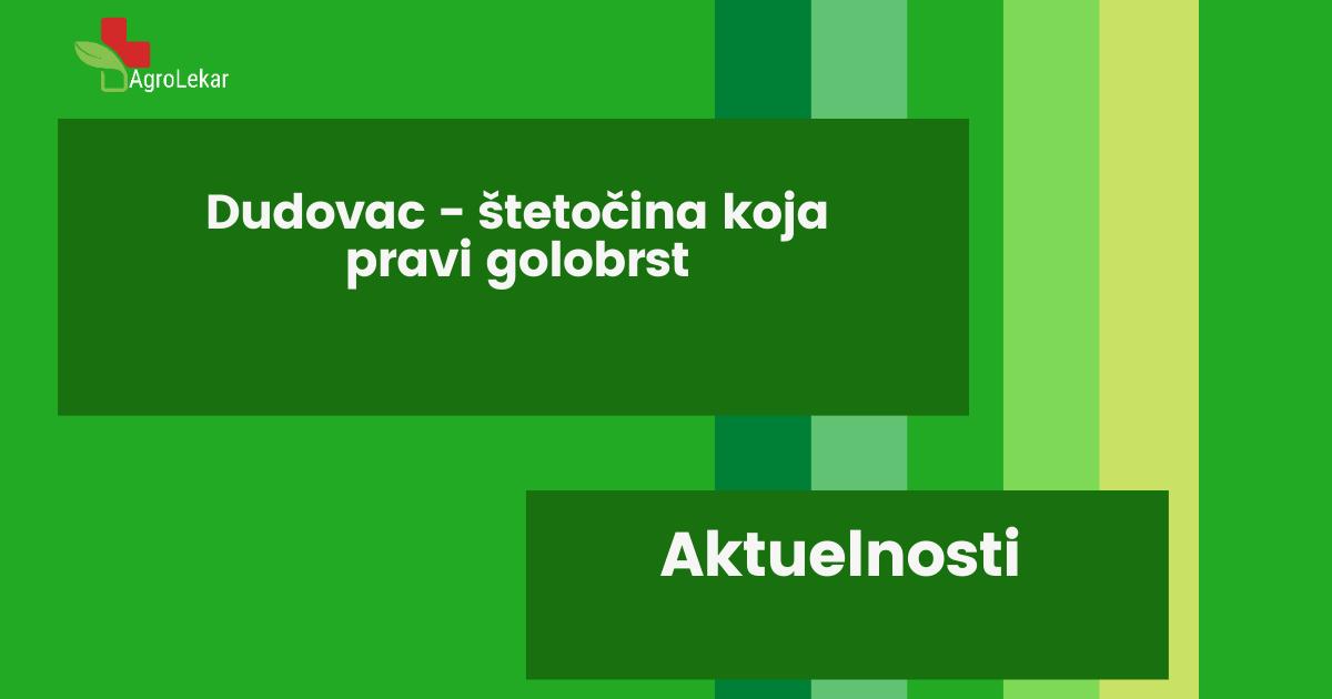 Read more about the article DUDOVAC-ŠTETOČINA KOJA PRAVI GOLOBRST