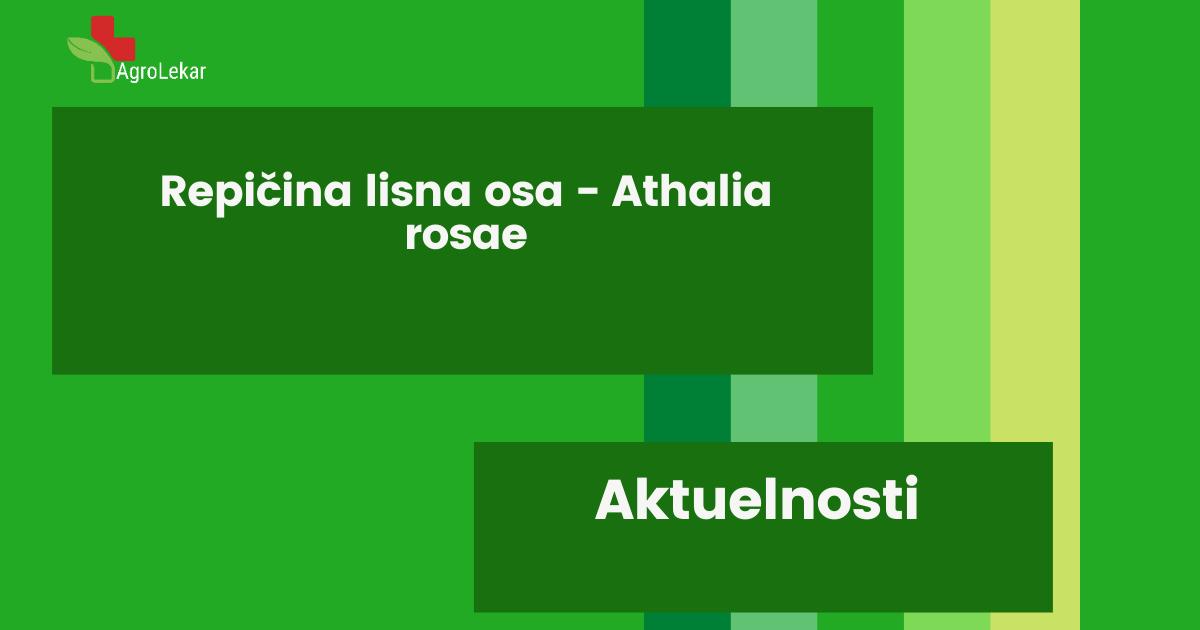 Read more about the article REPIČINA LISNA OSA – Athalia rosae