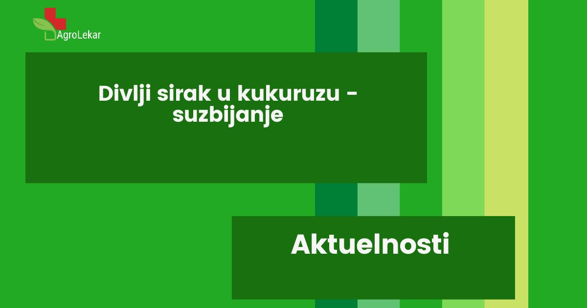 Read more about the article DIVLJI SIRAK U KUKURUZU – SUZBIJANJE
