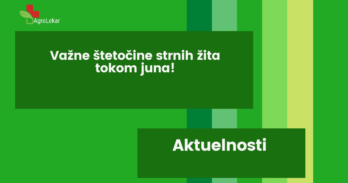 Read more about the article VAŽNE ŠTETOČINE STRNIH ŽITA TOKOM JUNA