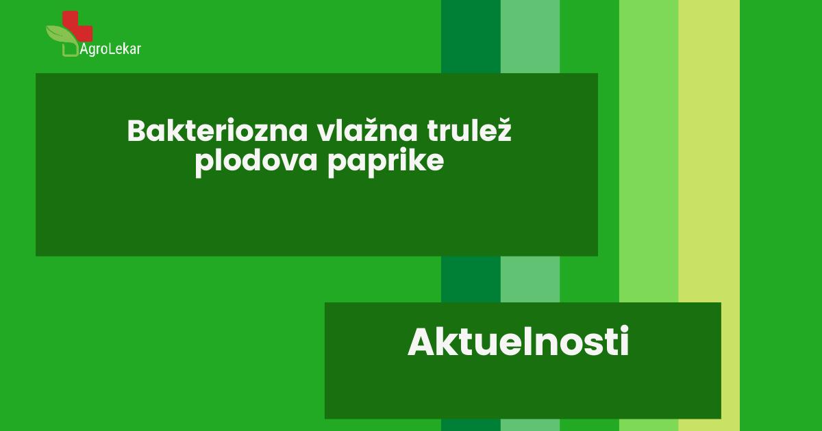 You are currently viewing BAKTERIOZNA VLAŽNA TRULEŽ PLODOVA PAPRIKE