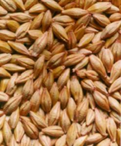 Dobro očišćeno seme - Tretirano fungicidom