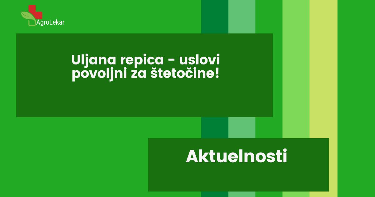 Read more about the article ULJANA REPICA – USLOVI POVOLJNI ZA ŠTETOČINE!!!